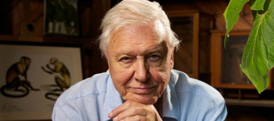 O fosila a fost numita dupa Sir David Attenborough, un celebru cercetator si naturalist