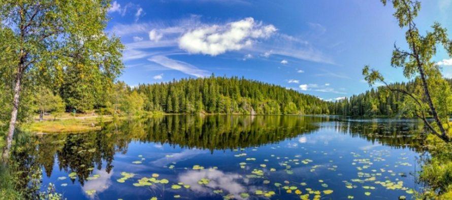 Norvegia este prima tara din lume care se angajeaza sa reduca defrisarile de padure la zero