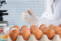 Oua cu fipronil si in Romania. Cel putin 15 tari din UE au primit milioane de oua contaminate cu aceasta substanta toxica