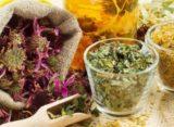 Romania are un numar impresionant de plante medicinale, insa producatorii locali nu sunt sustinuti de stat