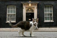 Motanul Larry, maidanezul de la resedinta din Downing Street 10. A ajuns mai popular decat multi politicieni din Marea Britanie