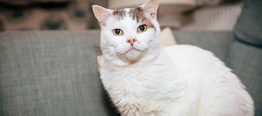 Pisica anului 2018 in Marea Britanie este motanul Theo. Felina i-a salvat viata stapanei sale