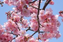 Cum va fi vremea in Romania pana pe 1 aprilie. Date ANM pentru inceputul de primavara