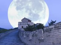 China a obtinut incoltirea primei seminte de bumbac pe Luna. Succesul se incadreaza in experimentele sondei Chang